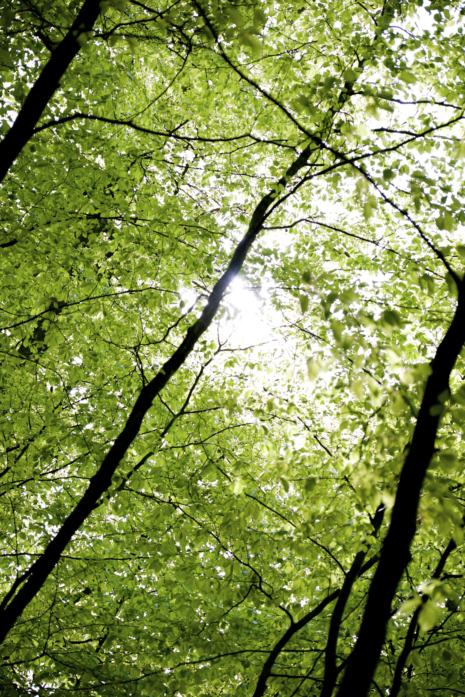 Solstråler i skogen